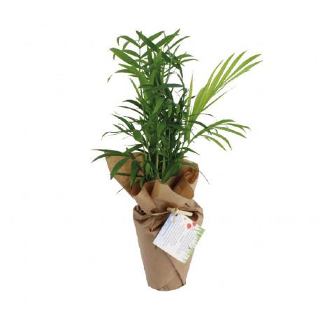Plante dépolluante 0DÉCHET