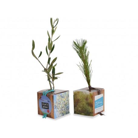 Cube arbre