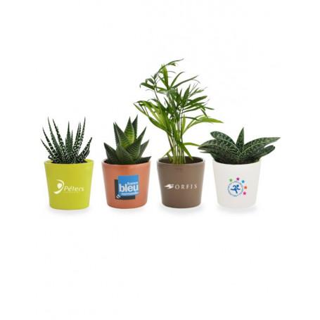 Mini plante dépolluante